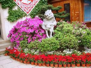 Садовые клумбы