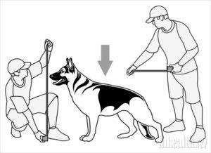 Замер собаки